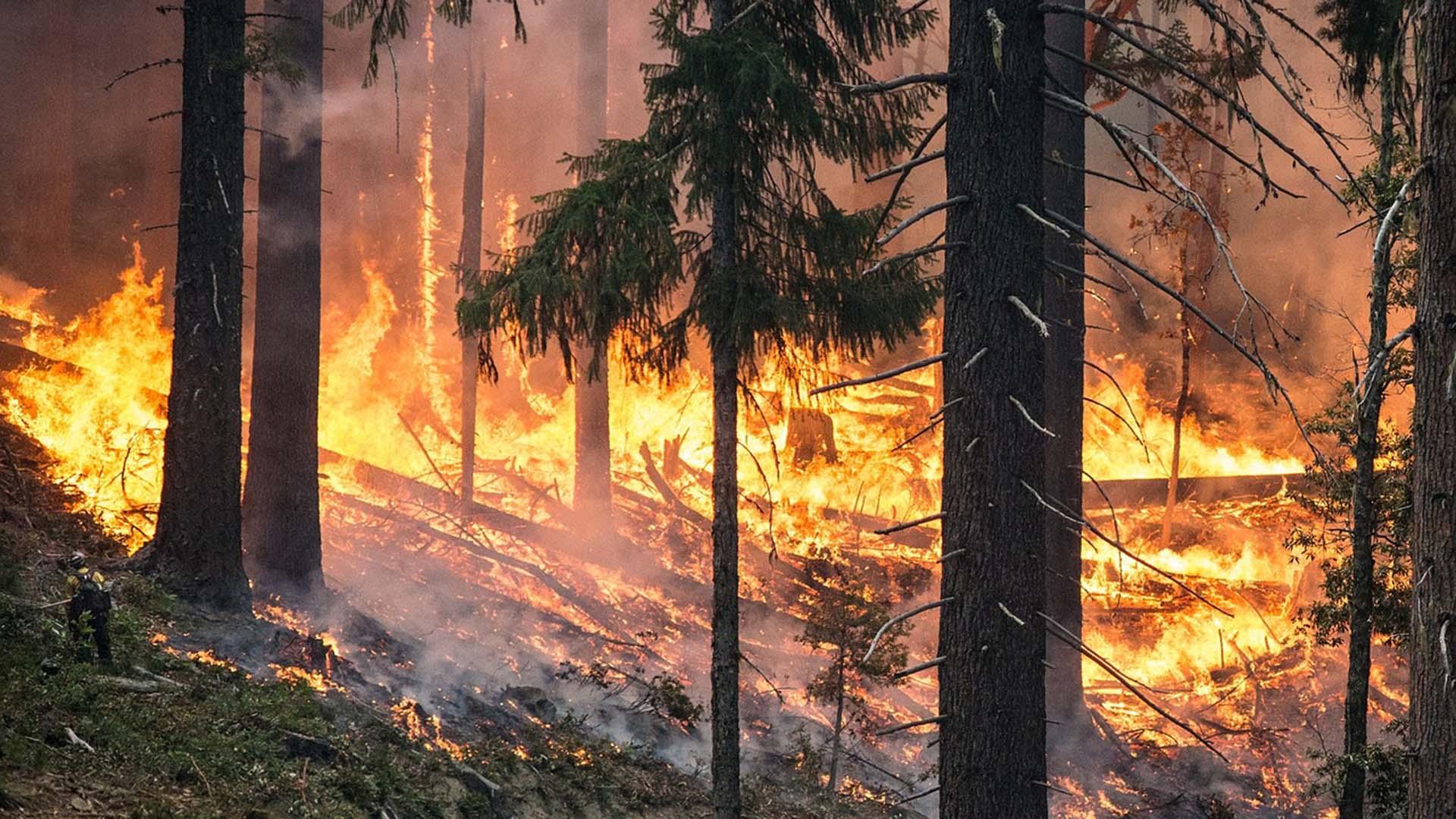 Incêndios florestais em Israel